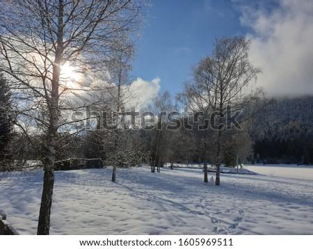 fairytale winter landscape at the wildsee near seefeld in tirol #1605969511