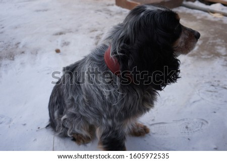 the dog plays with the owner in the yard #1605972535