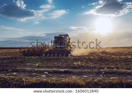 Picture of harvester in corn field harvesting in autumn. Husbandry concept. #1606012840