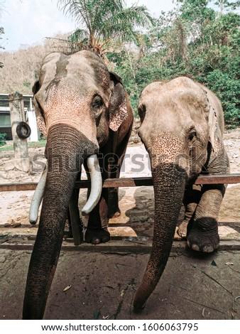 Elephants zoo animal the zoo #1606063795