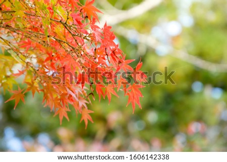 background autumn leaves in Japan #1606142338