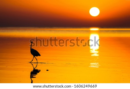Sunset water horizon bird silhouette view. Sunset water scene. Sunset bird silhouette on water #1606249669