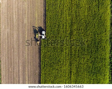 A tractor and a combine harvest corn #1606345663