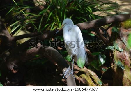 White Egret or Reddish Egret with white morph #1606477069