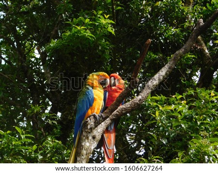two macaws nesting in a tree  #1606627264