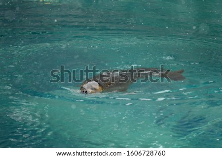 A cute seal in the pool #1606728760