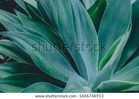 closeup agave cactus, abstract natural pattern background and textures, dark blue toned #1606746913