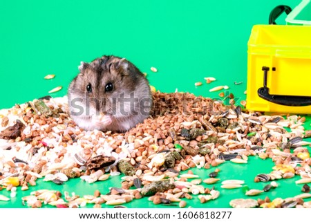 on a pile of grains and food for rodents sit a hamster and eats the background is green #1606818277