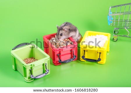 three plastic containers on a green background filled with cereals from one steals buckwheat hamster. pests rodents spoiled stocks of buckwheat #1606818280