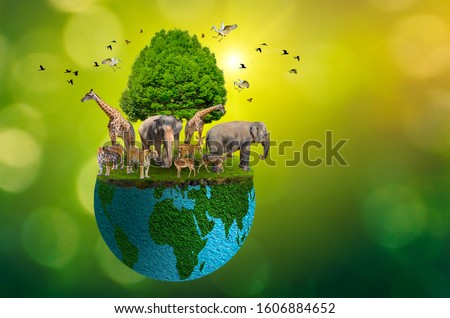 Concept Nature reserve conserve Wildlife reserve tiger Deer Global warming Food Loaf Ecology Human hands protecting the wild and wild animals tigers deer, trees in the hands green background Sun light #1606884652