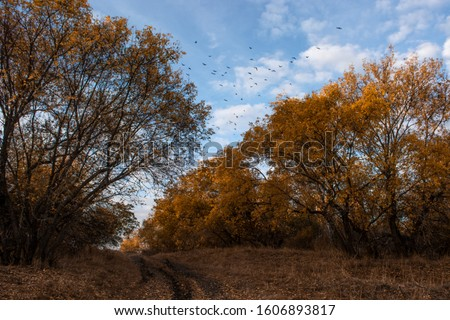 autumn alley with yellow orange leaves and trees clouds at the blue sky with flying birds #1606893817