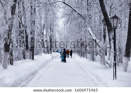 Winter forest landscape. Tall trees under snow cover. January frosty day in park. #1606971463