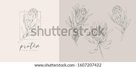 Protea logo and flowers. Hand drawn wedding herb, plant and monogram with elegant leaves for invitation save the date card design. Botanical rustic trendy greenery vector illustration #1607207422