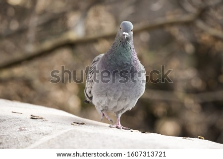 A dove stand on a stone
