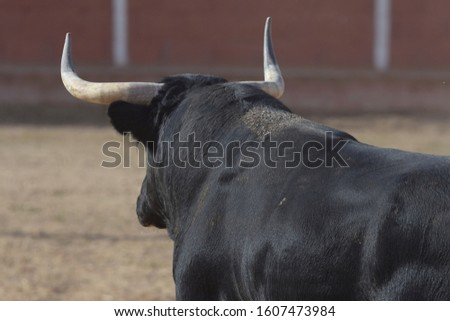 silhouette of spanish brave bull in the field #1607473984