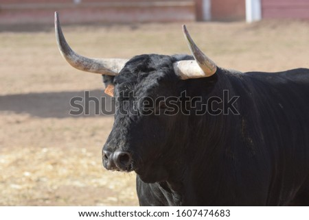 silhouette of spanish brave bull in the field #1607474683