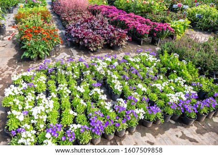 Sale of seedlings of different decorative flowers at the outdoors #1607509858