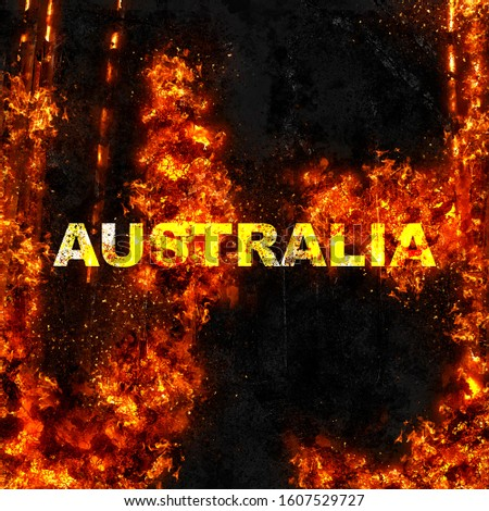 australia fire forest and animals life #1607529727