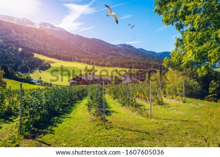 Farm field and village. Farm field and village on a blue sky day. Rural landscape farmhouse. Farm field and a village in Italy. Scenic farm field and a village in Italy in summer #1607605036