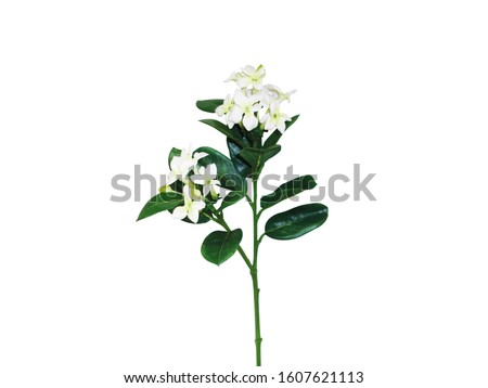 A Sprig White Tiare Flower With Leaf Isolated White Background #1607621113