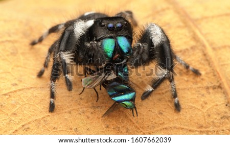 Spiders are air-breathing arthropods that have eight legs. Unlike insects, spiders do not have antennae.  Spider eat insects. Royalty-Free Stock Photo #1607662039