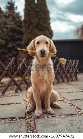 dog holding flower taken pic.