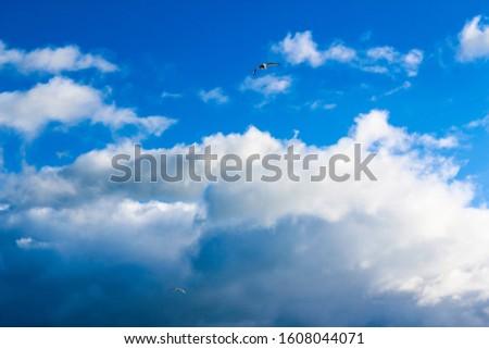 Blue cloudscape background photography . #1608044071