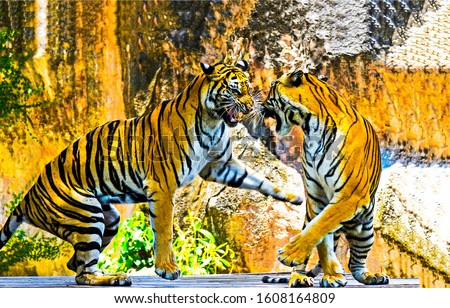 Two tigers play and fight. Tigers playing. Tigers fighting #1608164809