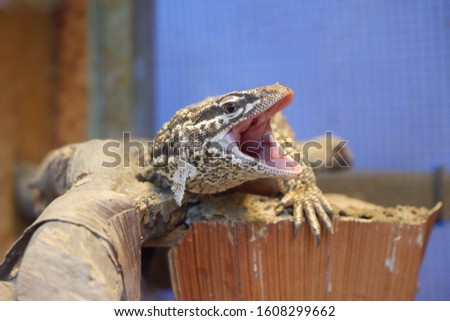 A picture of reptile that i take in the zoo
