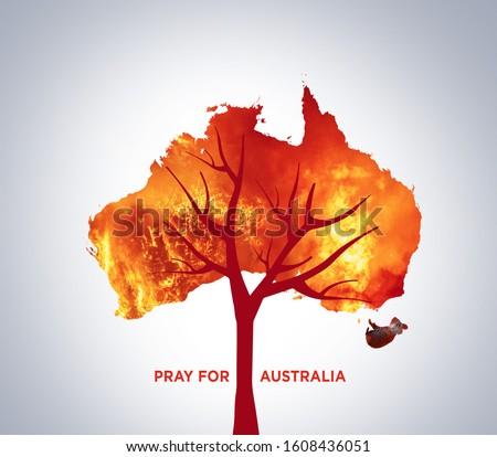 Pray for Australia. Australia bush fire concept. Tree burned by bush fire. Many  Animals killed in Fire. Koala & Kangaroo burned. Save tree save the animal. Environment day concept. #1608436051