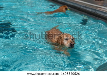 dogs enjoying a late summer day at the pool #1608540526