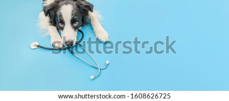 Puppy dog border collie and stethoscope isolated on blue background. Little dog on reception at veterinary doctor in vet clinic. Pet health care and animals concept. Banner #1608626725