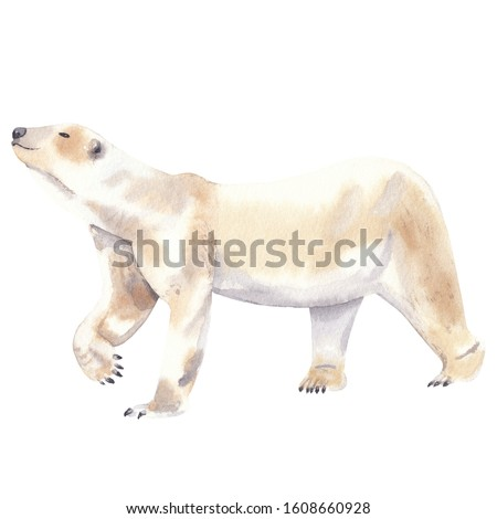 Watercolor illustration of polar arctic animal: polar bear Watercolor hand drawn hand painted clip art