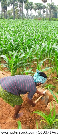 Corn garden  farming photos Natural farming #1608714658
