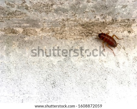cockroach on concrete wall background