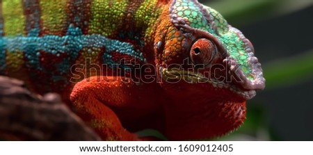 the mimicry of a chameleon #1609012405