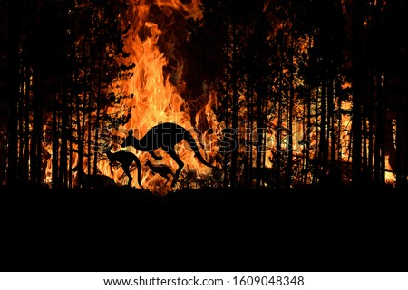 Bushfire IN Australia Forest Many Kangaroos And Other Animals Running Escaping To Save Their Lives, Evacuation destroyed silhouette. Royalty-Free Stock Photo #1609048348