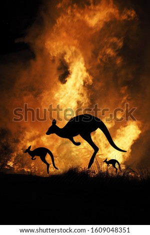 Bushfire IN Australia Forest Many Kangaroos And Other Animals Running Escaping To Save Their Lives, Evacuation destroyed silhouette. #1609048351