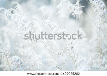 natural winter background, grass under the snow #1609095202