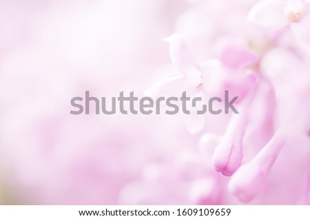 Pink lilac flowers spring blossom background.  #1609109659