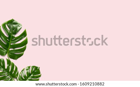 Tropical leaves Monstera on a pink  background for designs. Summer Styled. High quality image. Top view #1609210882