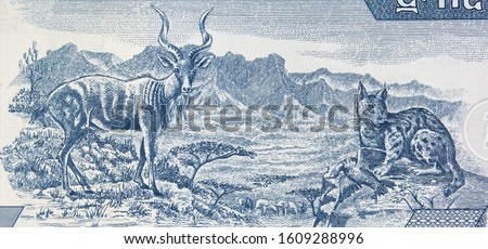 Kudu and caracal in Semien Mountains in Ethiopia on Ethiopian 5 birr note.