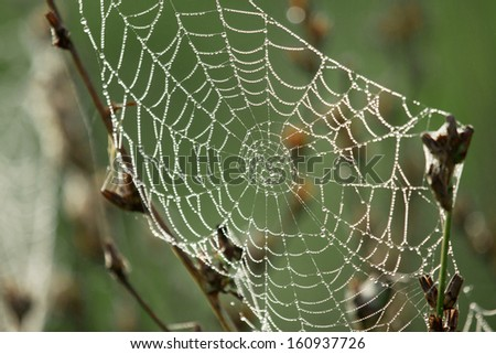 A spider web covered with morning dew #160937726