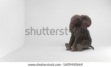 baby elephant sitting in white room Royalty-Free Stock Photo #1609440664
