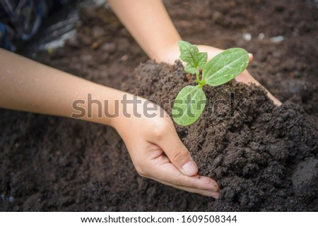 Select focus at seedling, Child holding young seedling plant in hands on green background to plant on soil. Concept Earth day #1609508344