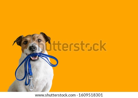 Dog sitting concept with happy active dog holding pet leash in mouth ready to go for walk #1609518301