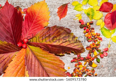 Colorful autumn leaves. Autumn leaves on a background, autumn concept. #1609573780