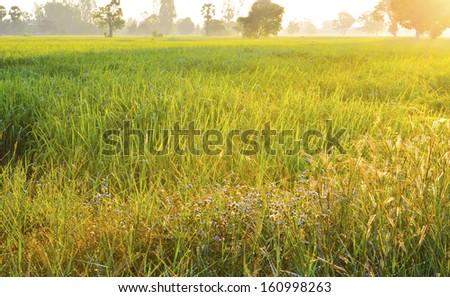 Grass field landscape at sunrise #160998263