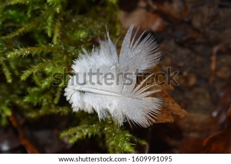 Pair of small feathers covered with raindrops and laying on a bed of dead leaves. Beautiful colors and details. #1609991095