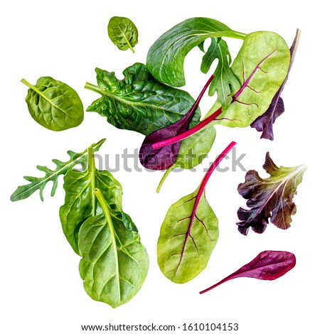 Flying Salad Leaves isolated on white background. Assortment of Green  salad with arugula, lettuce, chard, spinach and beets leaf.  #1610104153